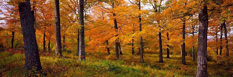 Fall Forest and flowers
